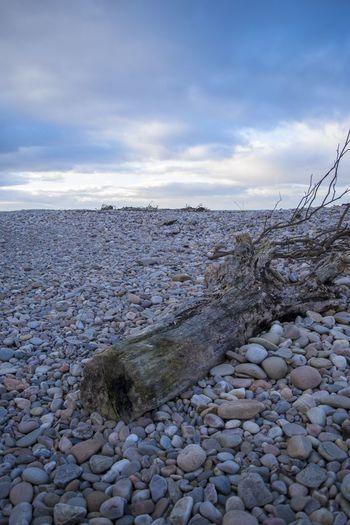 Scotland Moray Spey Bay Driftwood Sunset