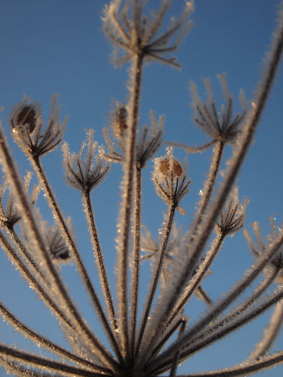 Frost Nature Sparkling Winter Wintertime Beauty In Nature Close-up Cold Temperature Day Daylight Flower Flower Head Growth Nature No People Outdoors Plant