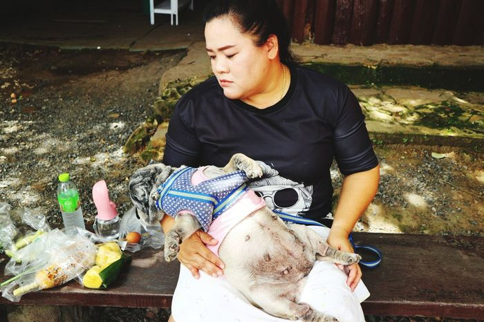 Nature Thailand Pug Life  Pet Dog Love Dog Petshop Nature Photography Beauty In Nature Pug Human Hand Pets Close-up Cleaning Product Broom Housework Spray Bottle Washing Up Glove Cleaning Sponge Chores Bath Sponge Scrubbing Cleaning Equipment Pit Bull Terrier Window Washer Sweeping Cleaner Möp Dusting Cleaning