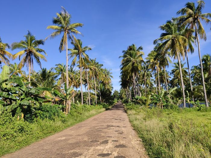 Footpath amidst palm trees on field against sky