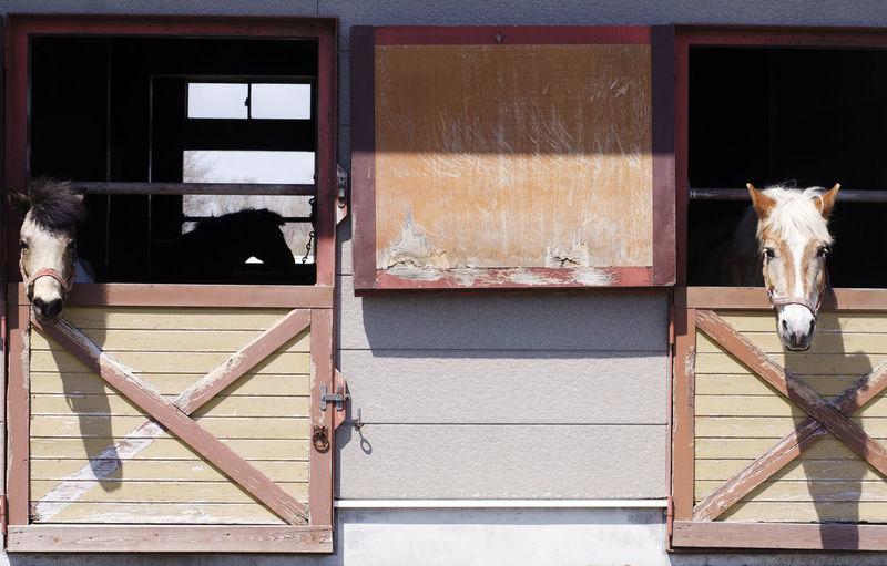 Shizunai Riding Hills Pony Club, Hokkaido, Japan. Farm Horses Nature Animals Countryside Day Equestrian Equestrian Life Horse Outdoors Pony Club Stable Stables