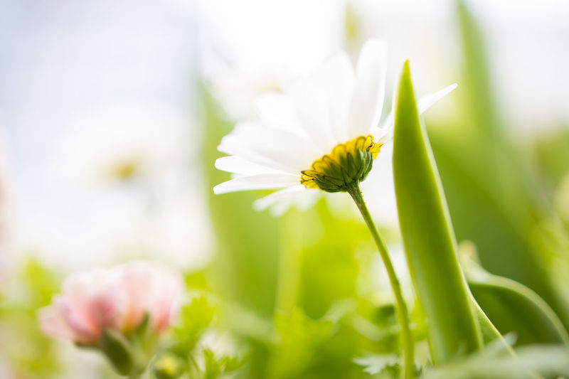 Flowers Flower Flowering Plant Freshness Beauty In Nature Plant Fragility Vulnerability  Growth Close-up Selective Focus Petal Nature Inflorescence No People Flower Head White Color Green Color Plant Stem Day Outdoors Springtime Low Angle View Lowangle Canoneos EosR