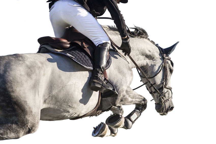 Equestrian themed photo Jump Background Competition Equestrian Equine Horse Horse Racing Horseback Riding Horseman Individual Jockey Livestock Mammal One Animal One Person Real People Riding Show Jumping Showjumping Sports White Background