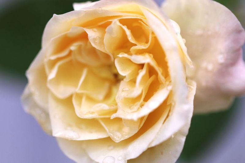 Flor Flower