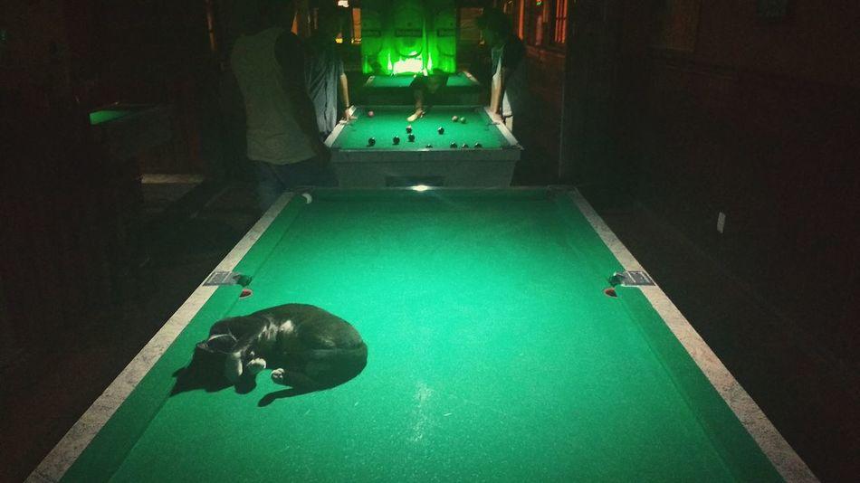 Sleepy player Green Color Indoors  Pool Table Snooker Picture Pool Cue No People Pool - Cue Sport Cat Animal Sleeping Sleepy Sleeping Cat Sleep Dark Low Lighting Bar Game Pooltable