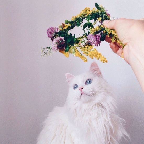 Pets Flower Domestic Cat Domestic Animals One Animal Animal Themes Mammal Human Hand Close-up Feline One Person Adults Only Adult People Day Fresh On Market 2016