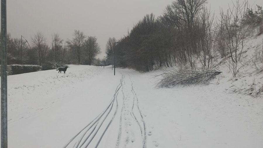 Winter in Denmark 2016 First Eyeem Photo