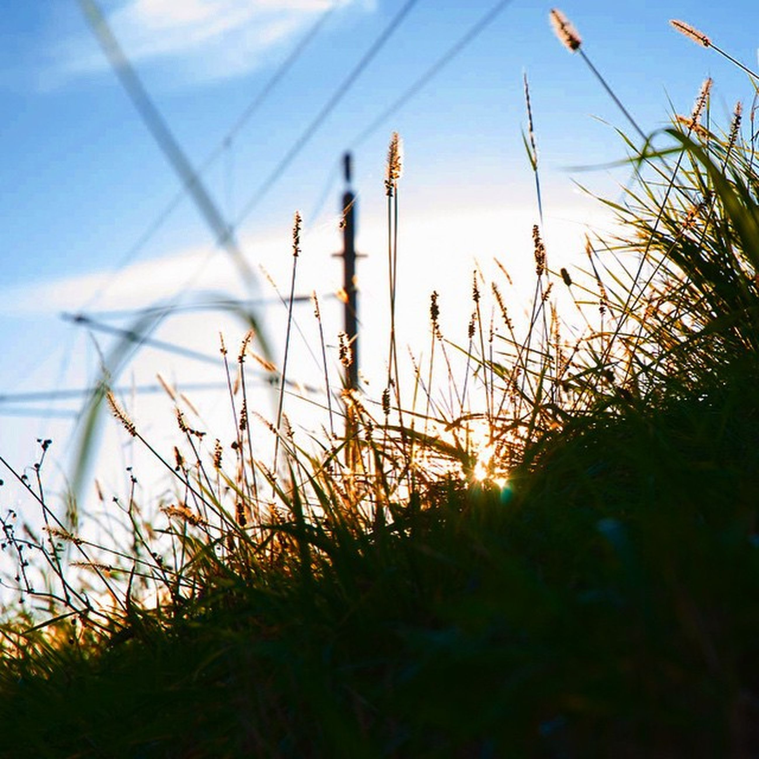 sunset, growth, plant, grass, tranquility, sky, nature, beauty in nature, sun, field, tranquil scene, scenics, sunlight, landscape, silhouette, stem, close-up, idyllic, outdoors, no people
