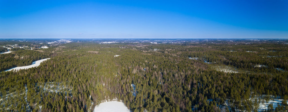 Forest in Finland Beach Blue Day Grass Landscape Marsh Nature No People Outdoors Scenics Sky