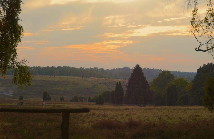 With Big Steps To Autumne🍃🍂 Dusk in the heath Eyem Best Shots Tadaa Community EyeEm Masterclass Eye4photography  Landscapes With WhiteWall