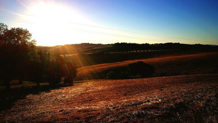 Le colline di Montelupone!!