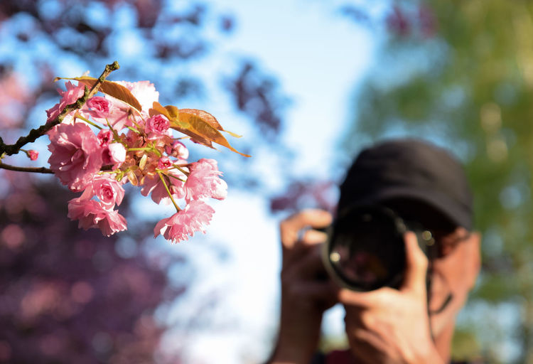 cherry blossom with blurred background from man photographing Spring Colorful Natural Beautiful Copy Space Outdoors Season  Change View Man Blurred Background Lifestyles Photography Themes Flower Tree Photographing Technology Men Springtime Close-up Sky Pollen Petal Cherry Blossom Plant Life In Bloom Flower Head Stamen Cherry Tree Blooming