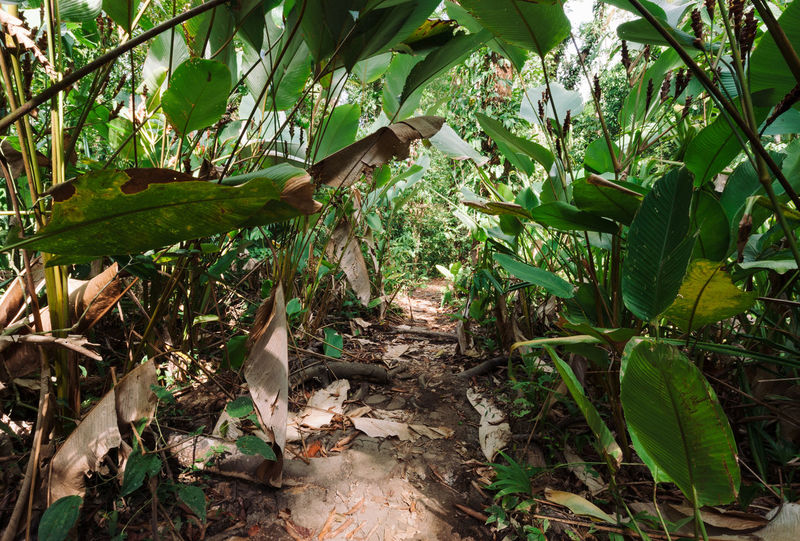 Hiking trail in Corcovado national park Costa Rica Corcovado National Park Forest Green Color Hiking Trail Jungle Leaf Nature Outdoors Plant Rainforest