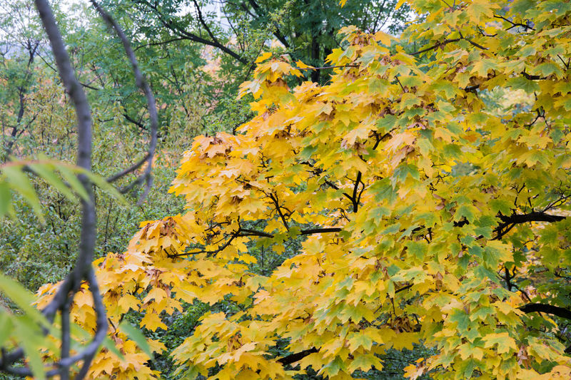 Autumn Autumn Autumn Colors Beauty In Nature Branch Change Close-up Czech Republic Day Forest Freshness Grebovka Growth Havlickovy Sady Horizontal Leaf Low Angle View Nature No People Outdoors Park Prague Scenics Tree Yellow