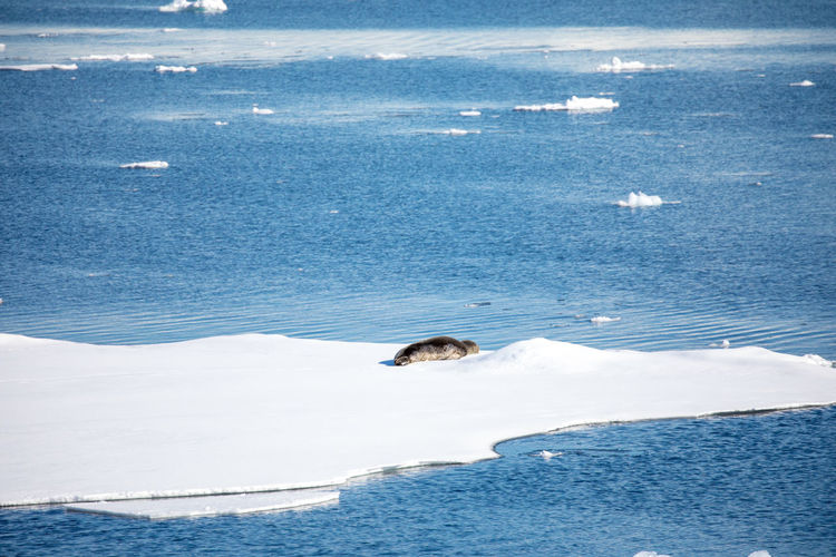 High angle view of seal on glacier in sea