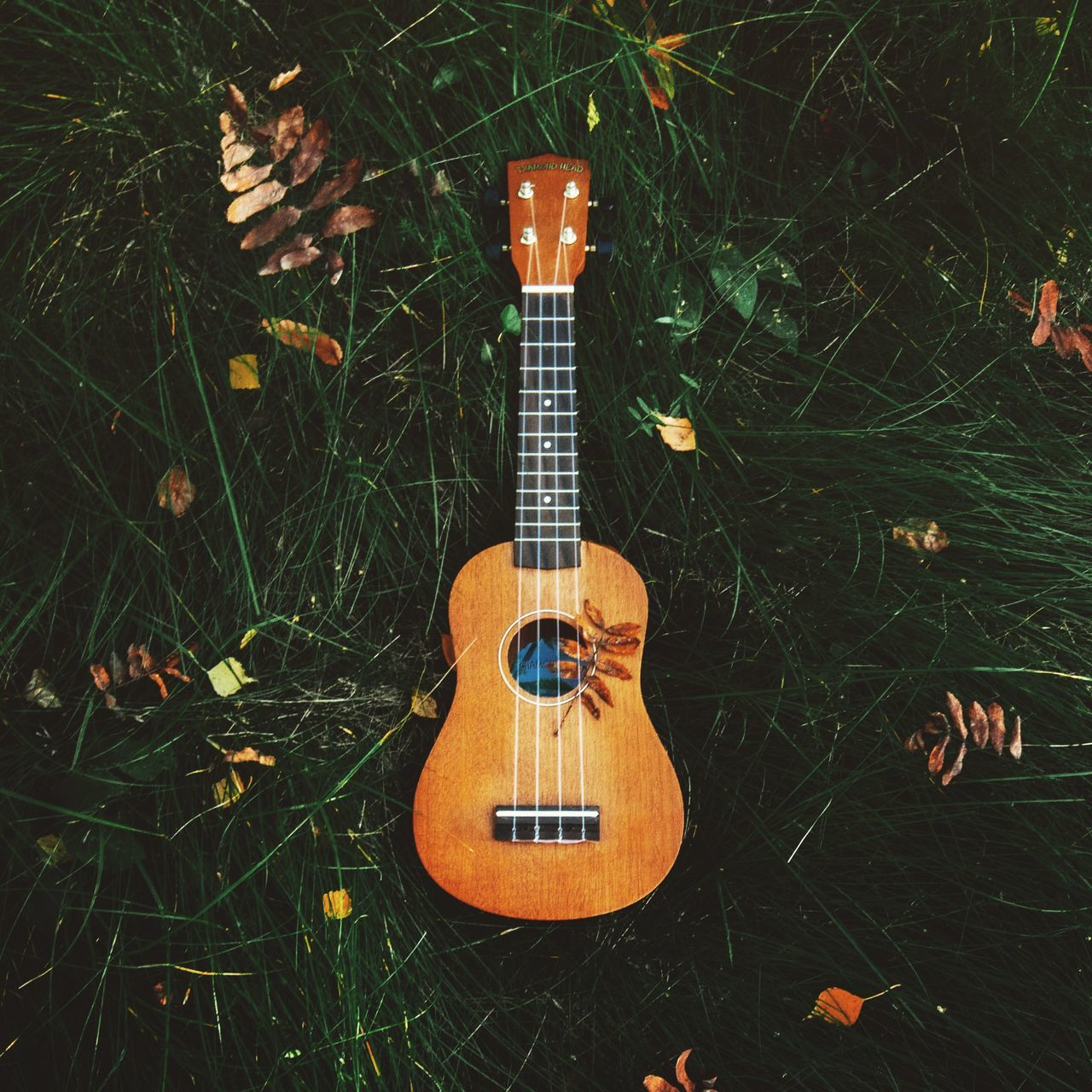 music, guitar, musical instrument, musical instrument string, acoustic guitar, fretboard, arts culture and entertainment, high angle view, string instrument, grass, woodwind instrument, no people, day, indoors, close-up