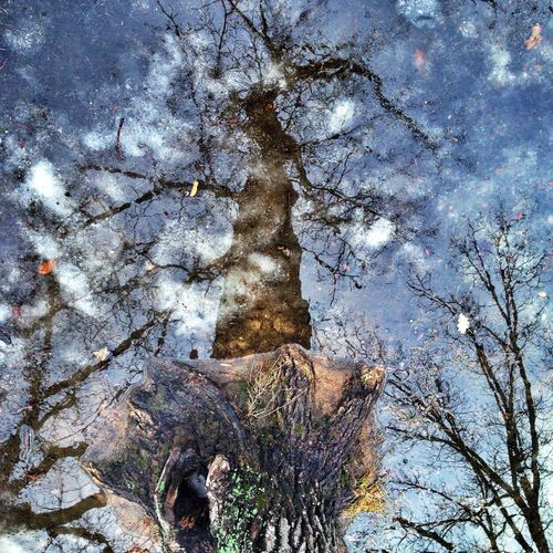 Spring reflection Water Reflections Water Reflection Sky Reflection Tree Reflection  Magic Reflection Colors Of Spring March Showcase Looking Down Sky Reflection Blue Light Colors Of Spring Tree_collection  Tree Trunk Tree Trunk Reflection Urban Spring Fever