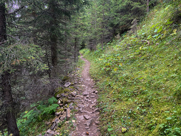 Trail on footpath amidst trees in forest