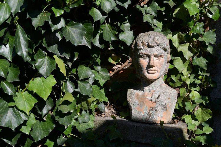 Statue among the ivy of an ancient garden Green Architecture Art And Craft Carving Craft Creativity Day Garden Decor Green Color Green Wall Decoration Growth Hedera History Human Representation Ivy Covered Leaf Male Likeness Nature No People Outdoors Plant Representation Sculpture Statue Stone Material