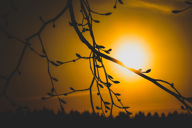 Sunset Sky Silhouette Orange Color Sun Beauty In Nature Plant Scenics - Nature Nature No People Tranquility Tree Tranquil Scene Sunlight Growth Outdoors Yellow Branch Idyllic Focus On Foreground Lens Flare Bright EyeEm Best Shots EyeEm Nature Lover EyeEm Gallery My Best Photo