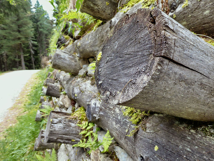 Blocks Wood Chopped Close-up Focus On Foreground Forest Log Nature No People Outdoors Path In Nature Rough Textured  Timber Wood Wood - Material