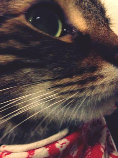 K I K I Kitty Cats Cat