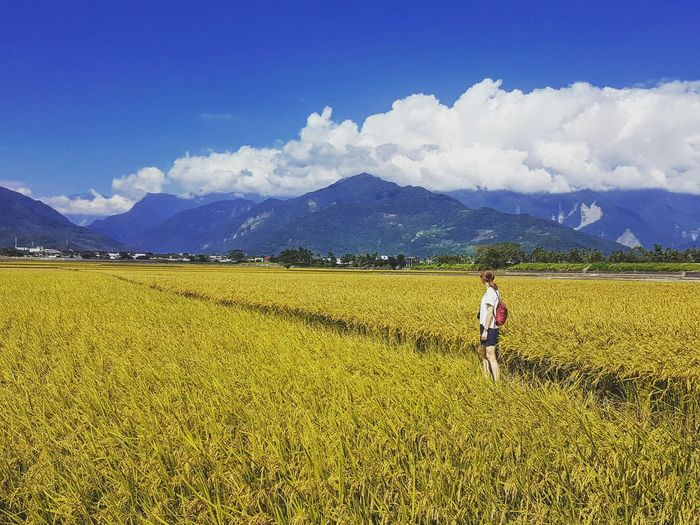 Rural Scene Agriculture Landscape Field Beauty In Nature Sky Nature Cloud - Sky Farm Mountain Yellow Mountain Range Girl In The Field Beyond Endlessness Alone Taiwan Taitung,taiwan Outdoors Scenics Photography Nature Photography Photo Travel The Portraitist - 2017 EyeEm Awards