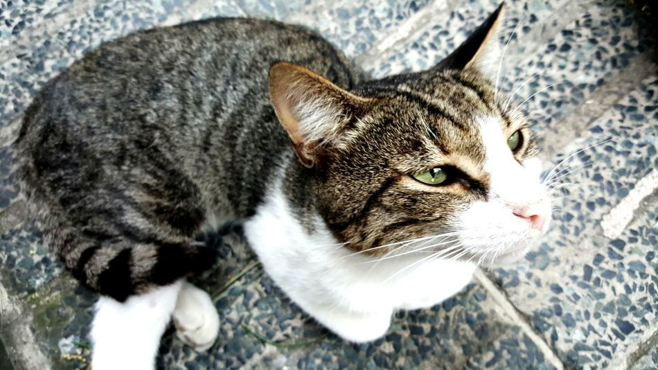 Cats Cat Cat♡ Catseyes Cateyes Eye Greeneye Taking Photos