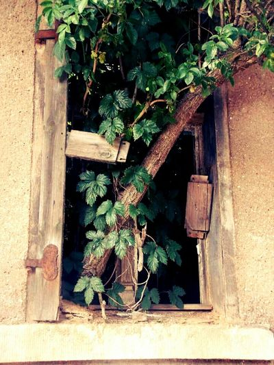 Lostplaces Lost Places Photography Hanging Tree Bernburg City Getting Inspired Nature Bernburg