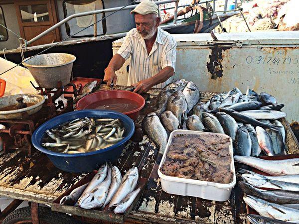 Erdek Sahil Fisher Man Fish Turkey