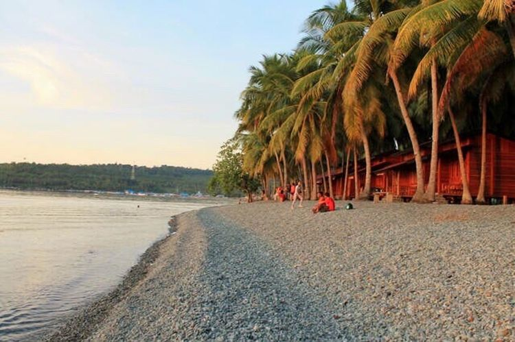 Marina Beach Ampana Central Sulawesi. Palm Tree Tree Beach Sky Outdoors Shore Tranquil Scene Beauty In Nature Sea Sand Nature Day Scenics Water Real People Men People Portrait Lenscap
