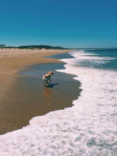 Dog Nature Sea