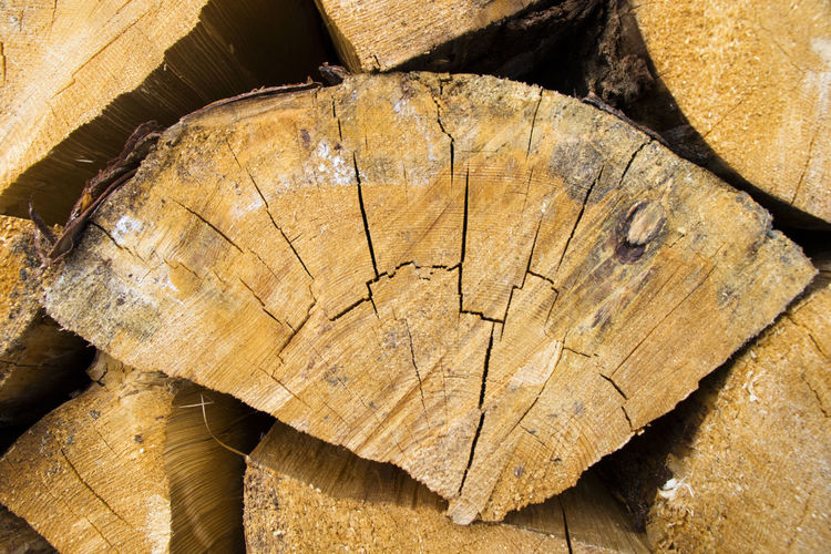 High angle view of tree stump in forest