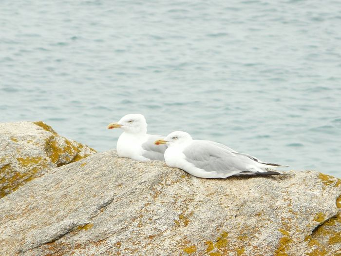 Close-Up Of Seagulls Perching On Rock By Lake