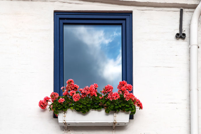 Reflection Architecture Beauty In Nature Building Exterior Built Structure Close-up Day Flower Flower Head Flower Pot Flowering Plant Fragility Freshness Glass - Material Growth Nature No People Outdoors Plant Vulnerability  Wall - Building Feature Window Window Box Window Frame Window Sill