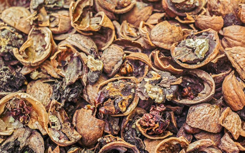 Cracked nuts infected with mold Bad Condition Mold Nuts Abundance Backgrounds Bad Close-up Corupted Cracked Day Decayed Defaced Dried Food Dry Food Food And Drink Freshness Full Frame Healthy Eating Infected Large Group Of Objects Mildew Mold Food Mold Mould Mouldy Nature No People Nuts And Seeds Nuts On The Ground Nutshell Outdoors Putrid Rotten