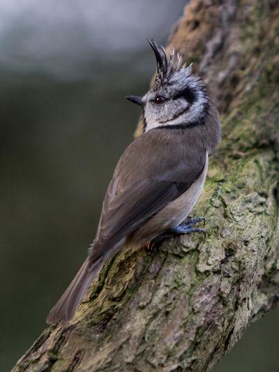 Bird Portait Blue Tit Chaffinch Coal Titt Crested Tit Great Time  Siskin Small Business