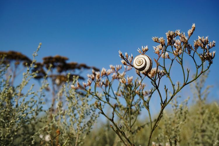 Close-up of snail on plant against blue sky