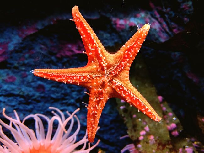 Starfish EyeEm Selects UnderSea Sea Life Water Underwater Sea Starfish  Close-up