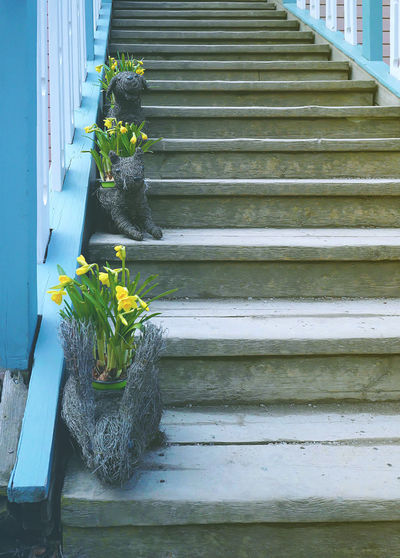 Animals Bloom Blue Cute Easter Flowerpot Flowers Happiness Happy Joy Plant Rabbit Sping Stairs Yellow Flower Art Is Everywhere