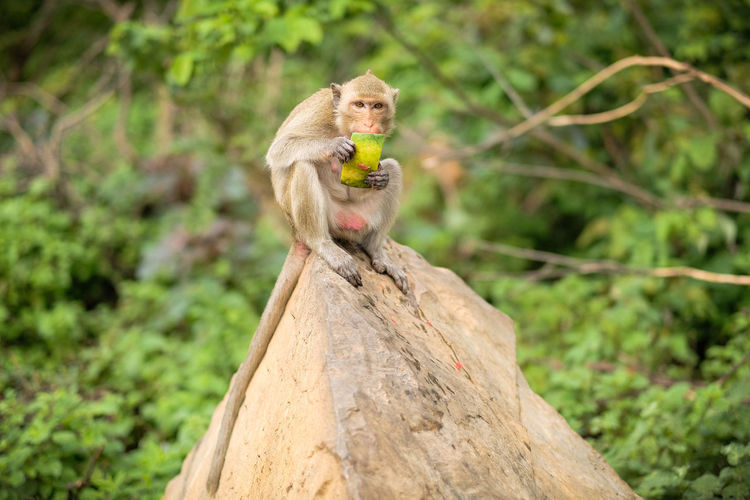 Monkey sitting on wood in forest