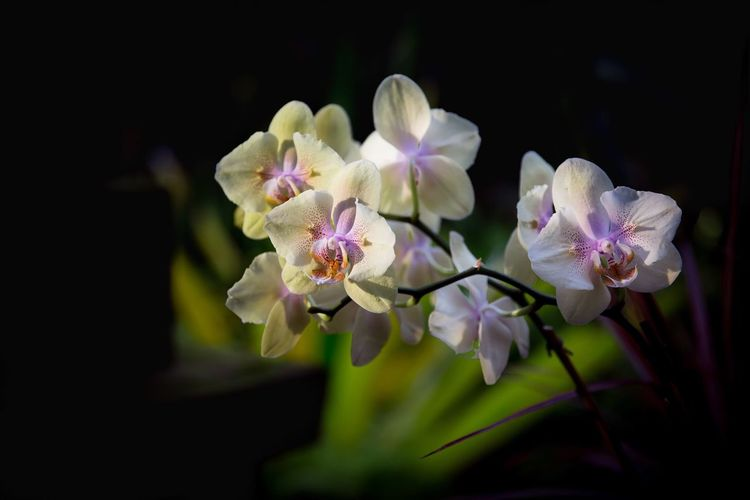 Orquídeas Flower Fragility Petal Beauty In Nature Blossom Freshness Plant No People Close-up Nature
