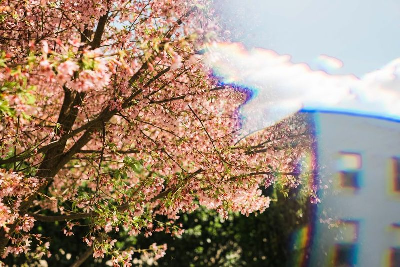 to create this image I used a Prism to reflect the building into the right side of frame in order to balance the tree. No photoshop used! I really like the way this looks so much like the scrambled TV stations did back in the 90s. Every now and then if you watched the station for long enough a clear frame would come through but something would still be off about it. Punctuating the fact that we weren't meant to see it and making us feel weird that we caught a glimpse. Glitch The Innovator
