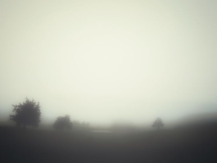 Ethereal Fog Morning Mist Nature Stillness Quiet Moments Tranquility Landscape Tranquil Scene Beauty In Nature Scenics Outdoors Field Sky Summer Taking Photos Shadow And Light Walking Around Bucolic Farm