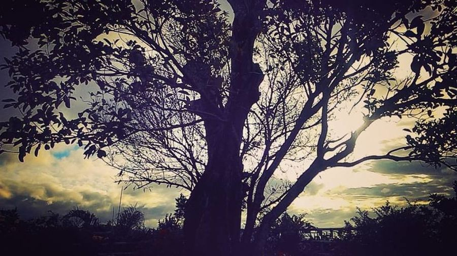 Atmosphere Bare Tree Branch Covering Lifestyles Light Majestic Men Mystery Real People Rear View Season  Silhouette Standing Three Quarter Length Tranquil Scene Tranquility Tree Trunk Winter Women Photography In Philippines Rizal Philippines Philippines