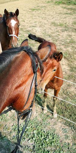 Foal Meeting Friends EyeEm Best Shots Horse Photography  Shiny EyeEm Selects Bologna Horse Riding Walks Pets Bridle Horseback Riding Working Animal Horse Racing Jockey Herbivorous Horse Saddle