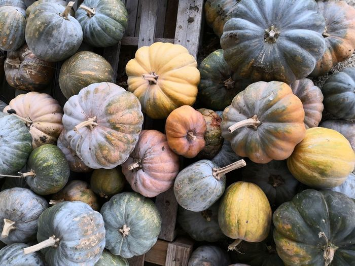 Pumpkin Pumpkins Pumpkin Patch Zucca Zucche Halloween Sicilia Backgrounds Full Frame Vegetable Market Squash - Vegetable Close-up For Sale Raw Food
