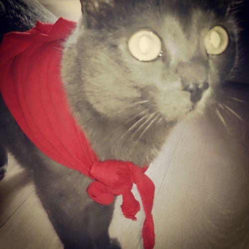 Сладкий мой котишка Micetto Нарцисс Narciso