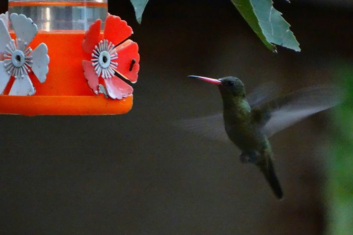 One Animal Animal Themes Hummingbird Animals In The Wild No People Bird Nature Close-up Night Outdoors