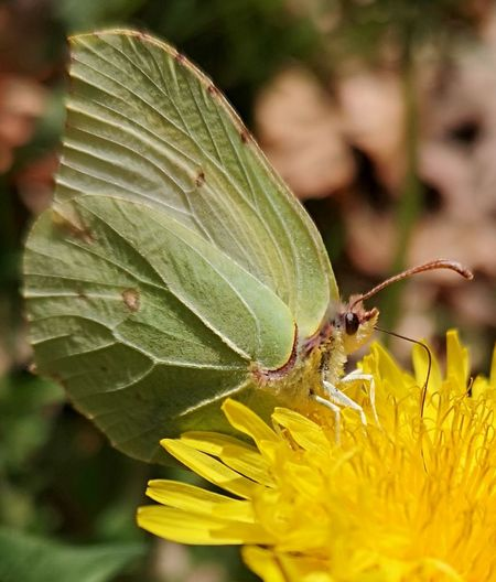 EyeEm Best Shots EyeEmNewHere EyeEm Nature Lover Flower Flower Head Leaf Yellow Insect Close-up Animal Themes Plant Green Color Butterfly - Insect Flowering Plant Pollen